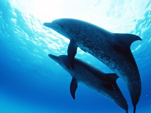 dolphins_under_the_sea-normal